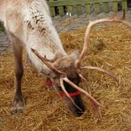 Taunton Christmas Festival 2011